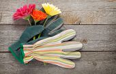 Gardening gloves and gerbera flowers on wooden table background