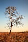 Lonely Tree in Field