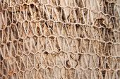 foto of walnut-tree  - Walnut Tree Bark Covered with Net Making Funny Texture - JPG