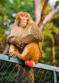 Monkey sit on a fence