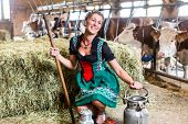Bavarian woman with sexy Dirndl dress, milk can and pitchfork in cow house