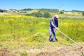 ALJEZUR - MAY 11: Farmer working on his land in an old fashioned way on May 11 2014 in Aljezur Portugal
