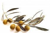 picture of olive branch  - Fresh olives on the olive branch isolated on white background - JPG