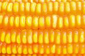 stock photo of corn  - Dried corn close up - JPG