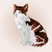 picture of kitty  - Kitty three color sitting feline vector illustration - JPG