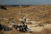 foto of punctuation  - The North Beach section of Tybee Island is protected by extensive system of dunes  - JPG
