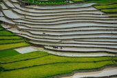 stock photo of northeast  - Mu Cang Chai is a rural district of Y - JPG
