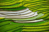 foto of northeast  - Mu Cang Chai is a rural district of Y - JPG