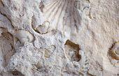 image of exoskeleton  - coquina background old fossil limestone resources paleontology ancient - JPG