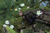 stock photo of lichenes  - Lichen flower water fern near the water pool - JPG