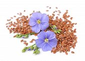 stock photo of flax plant  - Flax seeds with flowers close up on white - JPG