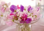 picture of sweetpea  - Bouquet of beautiful sweet peas flowers, a studio photo ** Note: Shallow depth of field - JPG