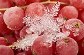 image of ice crystal  - Background from many frozen currants covered with ice crystals - JPG