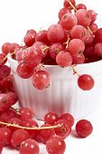 image of ice crystal  - Frozen currants with stems covered with ice crystals in white porcelain bowl on a white background - JPG