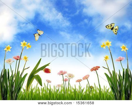 Spring meadow with flowers and