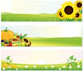 Beauty Thanksgiving Nature banners set - vector illustration with rural landscape, sunflowers and ripe harvest