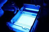 picture of electrophoresis gel  - in a biological lab a worker is pipetting a sample in an agarose gel for electrophoresis - JPG