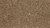 picture of gneiss  - 1x4ft Sample of Brazilian Yellow Capri Granite - JPG
