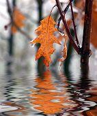 Marrón otoño hoja reflejada en el agua