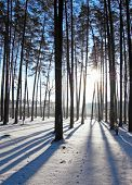 stock photo of winter scene  - Winter in the park - JPG