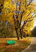 foto of banquette  - Autumn in the park - JPG