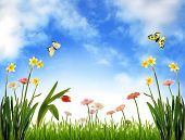 foto of blue sky  - Spring meadow with flowers and blue sky - JPG