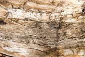 Old rotten wood. Texture or backgound.