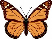 Monarch Butterfly.Eps