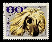 POLAND-CIRCA 1969:A stamp printed in Poland shows image of The Afghan Hound is one of the oldest sighthound dog breeds, circa 1969.