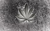 Bush Marijuana On Blurred  Background. Bush Cannabis. poster