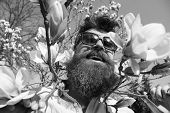 Brutality And Tenderness Concept. Man With Beard And Mustache Wears Sunglasses, Magnolia Flowers Bac poster