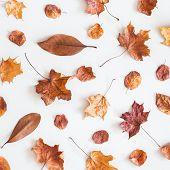 Autumn Composition. Pattern Made Of Dried Autumn Leaves On White Background. Autumn, Fall Concept. F poster
