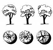 Trees For A Landscape Design. Different Hand Drawn Trees Isolated On White Background, Sketch, Archi poster