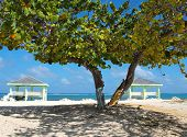 stock photo of collier  - Colliers public beach on Grand Cayman - JPG