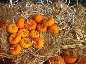 a grouping of small pumpkins on chair