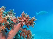 coral reef with exotic fish