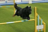 Groenendael Jumping