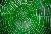stock photo of spiderwebs  - Morning dew - JPG