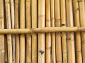 Background texture pattern of dried bamboo sticks