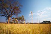 Grassland African Savannah