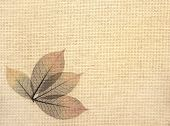 Background with leaves on canvas texture