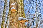 Mushrooms on a tree log