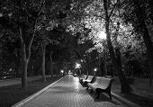Night Park black white