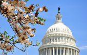US Capitol, Washington DC, US