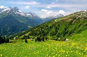 stock photo of dandelion  - Alpine mountains and yellow dandelions in Austria - JPG
