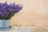 image of bucket  - Bouquet of lavender in a rustic metal bucket - JPG