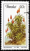 Postage Stamp Transkei, South Africa 1986 Krantz Aloe
