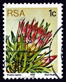 Postage Stamp South Africa 1977 Common Sugarbush, Flowering Plan
