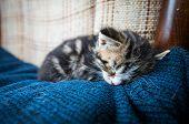 Sleepy Baby Cat On Couch