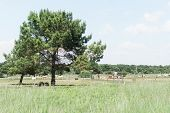 Beautiful Farmland And Horses